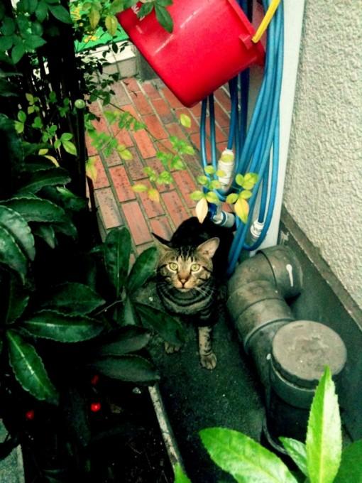 ねこ by Iris&Photo fx