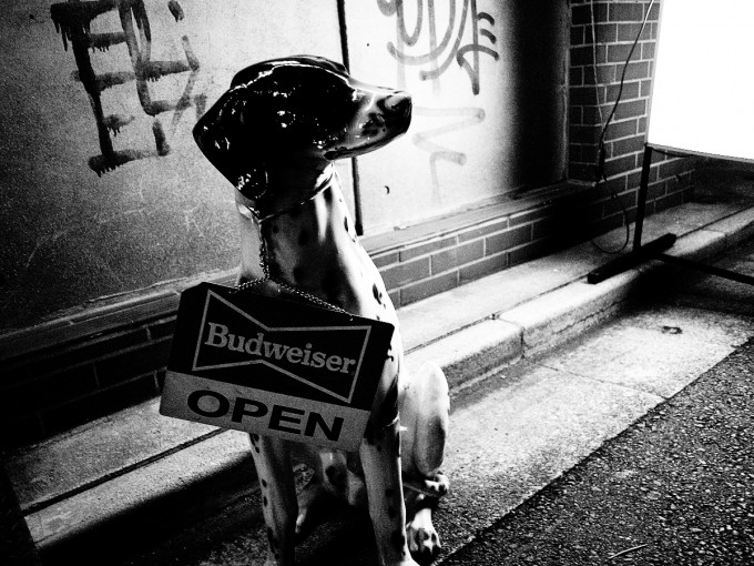 Budweiser犬 by LUMIX G 14mm F2.5 ASPH
